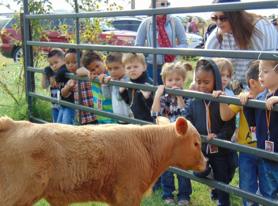 Learning about farm animals